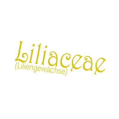 Schriftzüge-Liliaceae